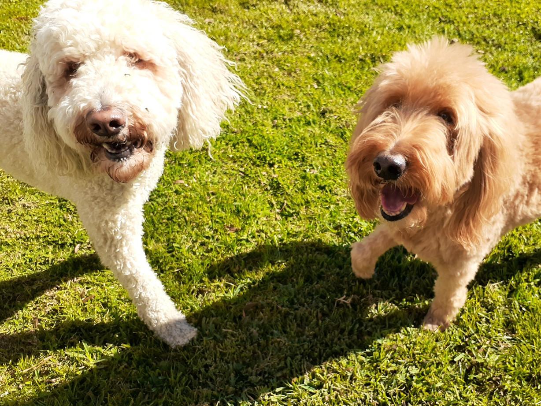 Baxter & Minnie