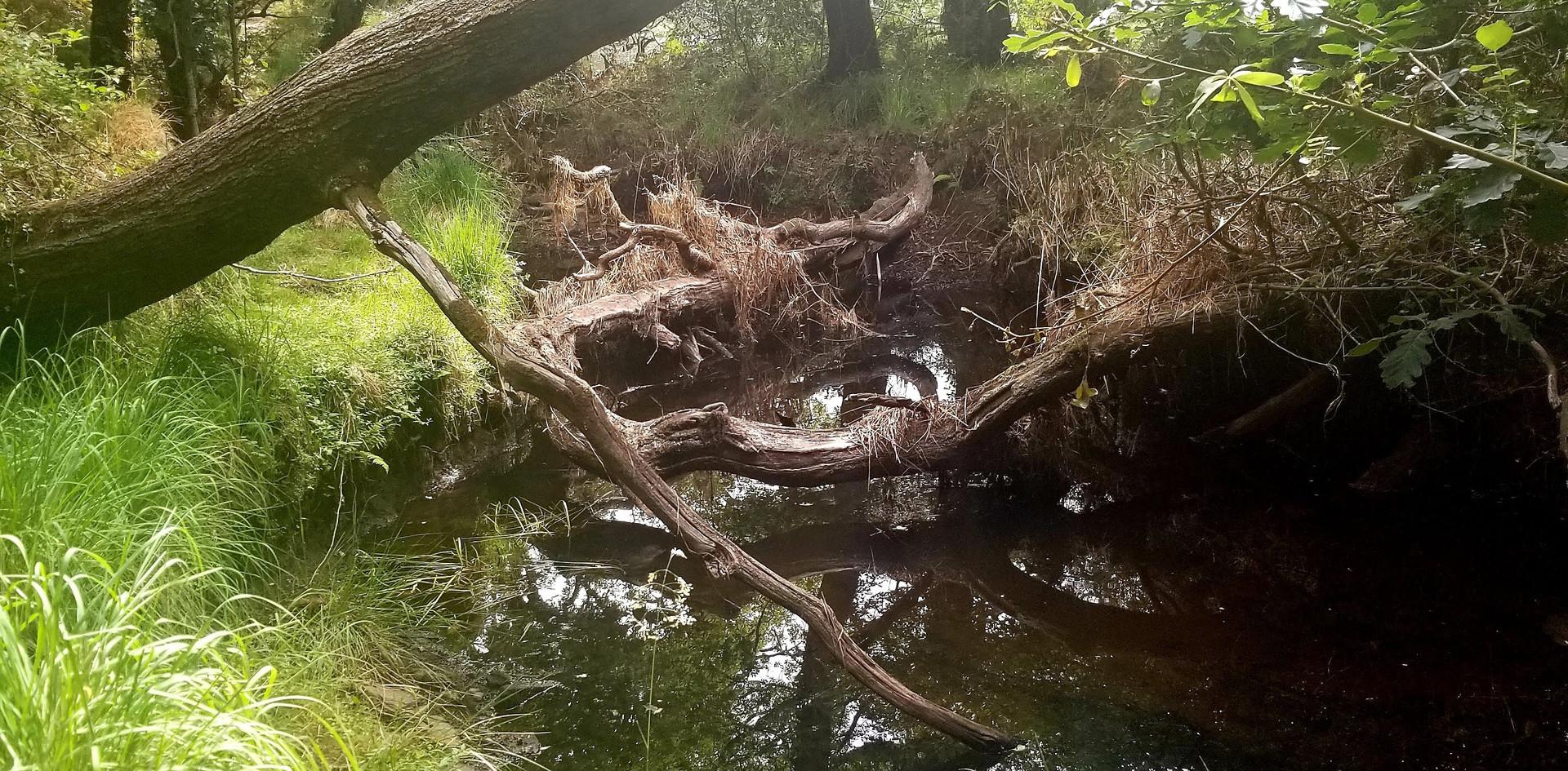 Along the Lakes of Killarney
