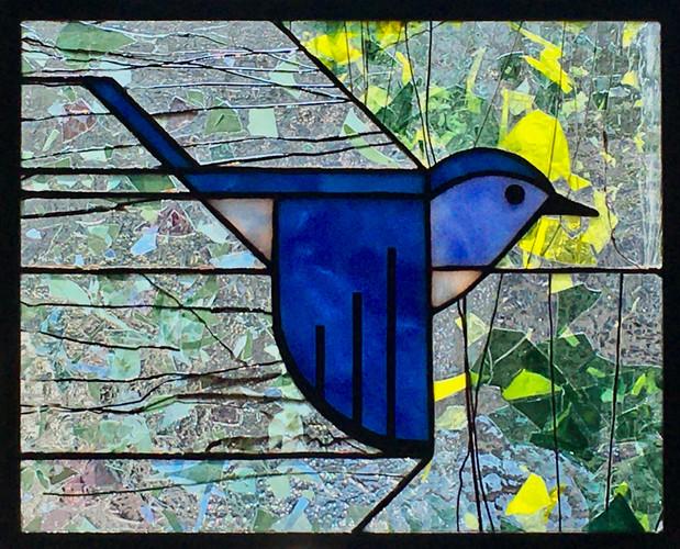 Mountain Bluebird IV