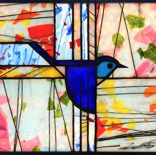 Mountain Bluebird X