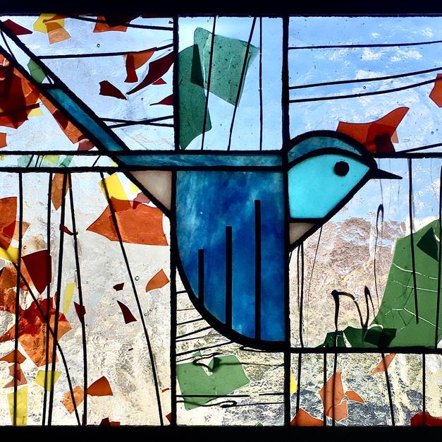 Mountain Bluebird V
