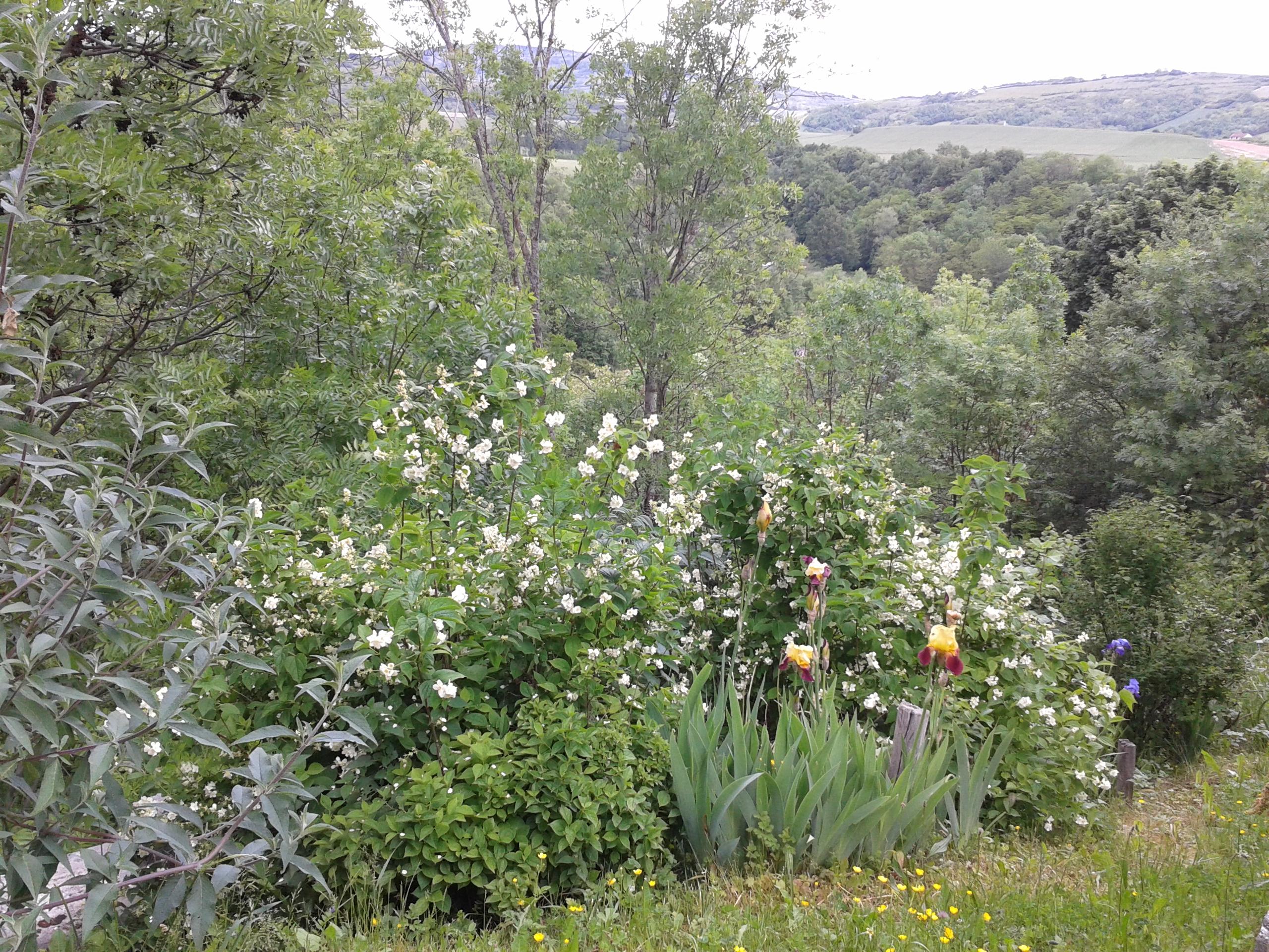 jardin_du_prieuré