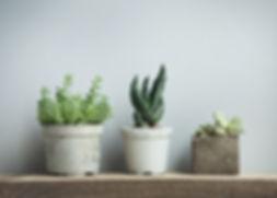 kalkmaling og planter i potter