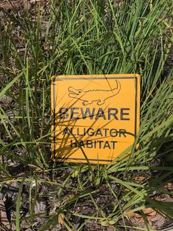 Beware of Alligator warning sign