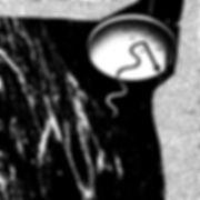 Charlie Murphy - Image for Brochure .jpg