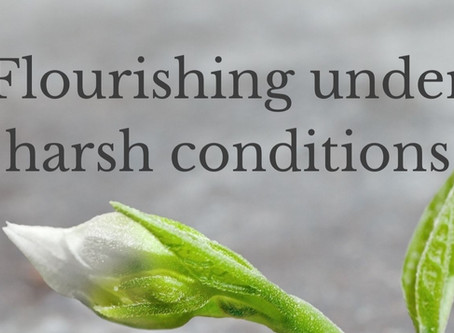 Flourishing under harsh conditions