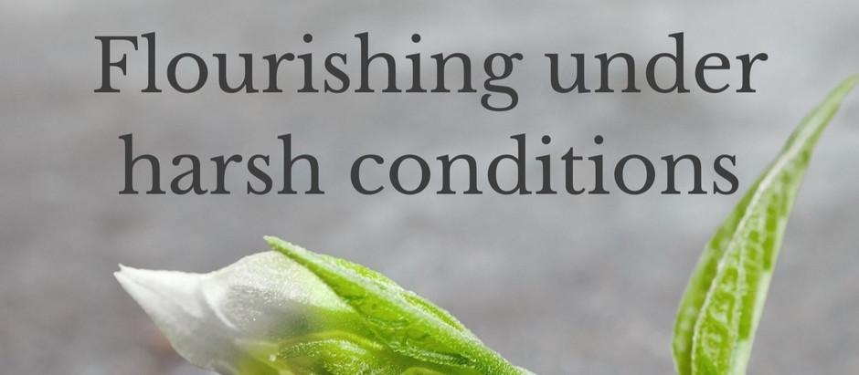 Flourishing under harsh conditions