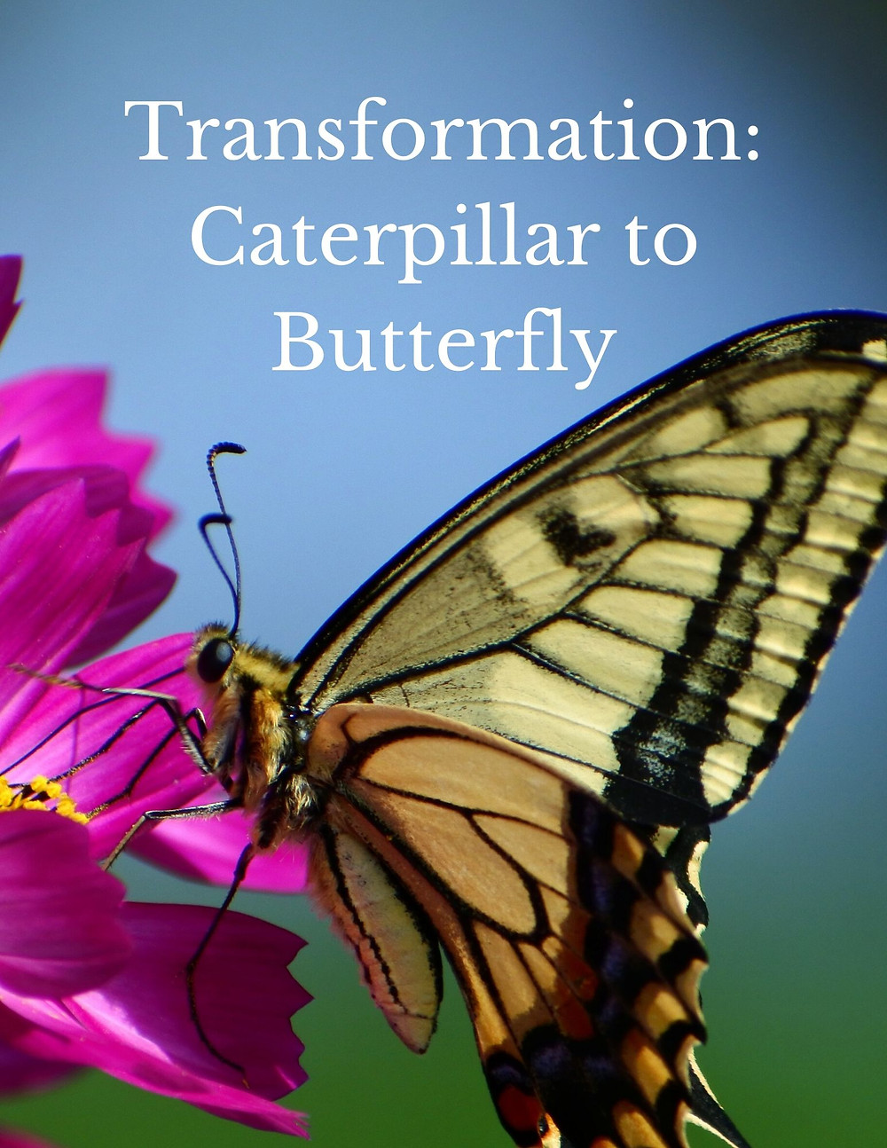 Transformation: Caterpillar to Butterfly