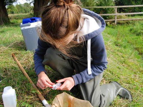 Hidden Insights of the Freshwater Shrimp!
