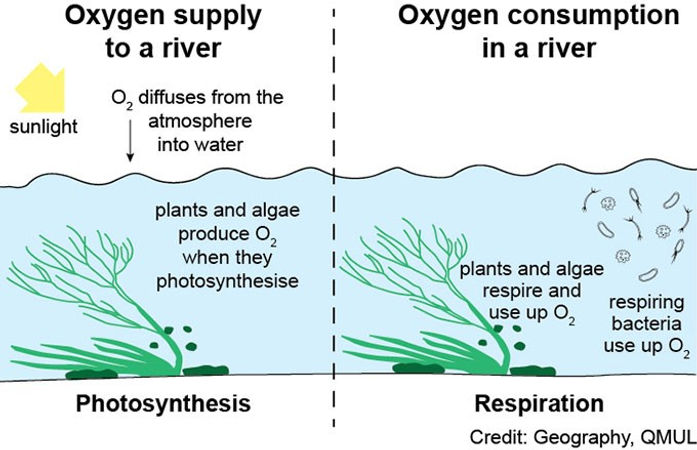Oxygen supply to a river.jpg