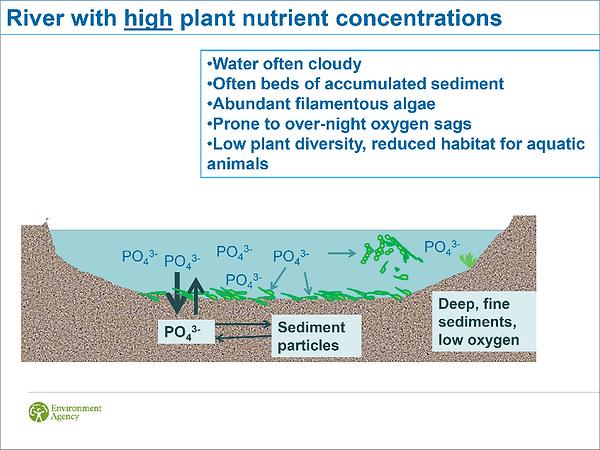 Phosphates image.png