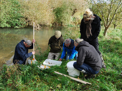 Riverfly Monitoring for the Windrush
