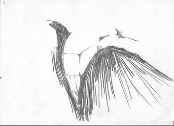 wingstine 4.tif