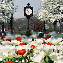 3-clock-flowers_edited.jpg
