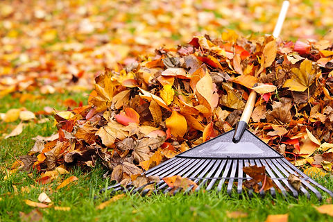 Pile of fall leaves with fan rake on law