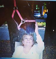 Constelação com cavalos