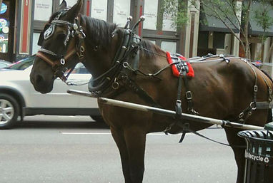 Exploited Nashville Carriage Horse