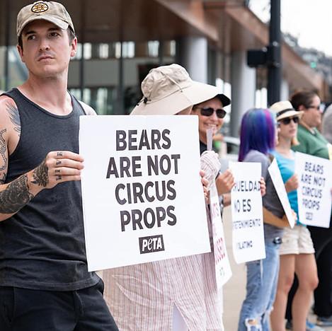 Bears Aren't Circus Props.jpg