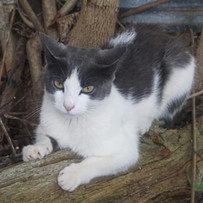 Kitty at Gracie's Acres.jpg