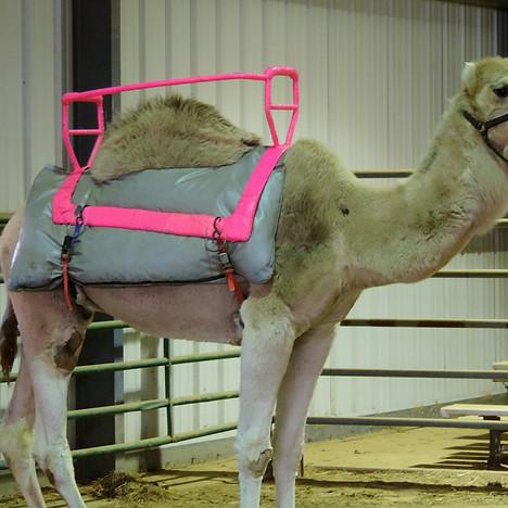 Exploited Camel Garden Bros Circus.jpg