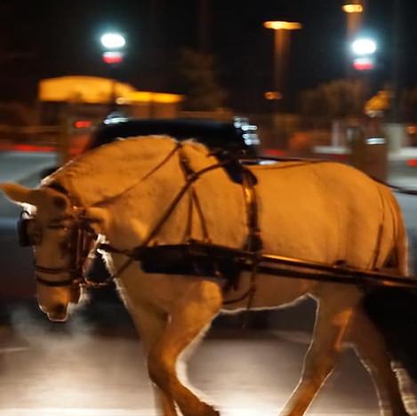 Carriage Horse.jpg
