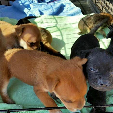 Rescued Puppies.jpg