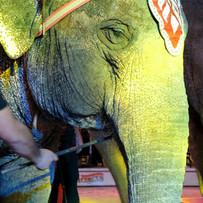 Elephant with bullhook Garden Bros Circu