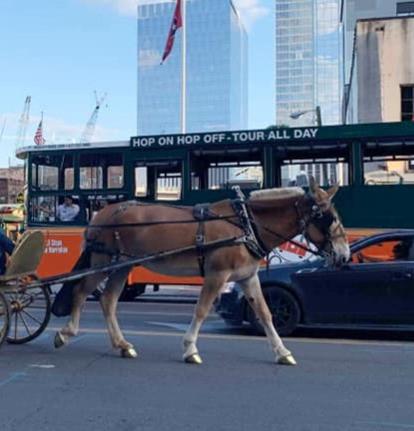 Carriage Mule.jpg