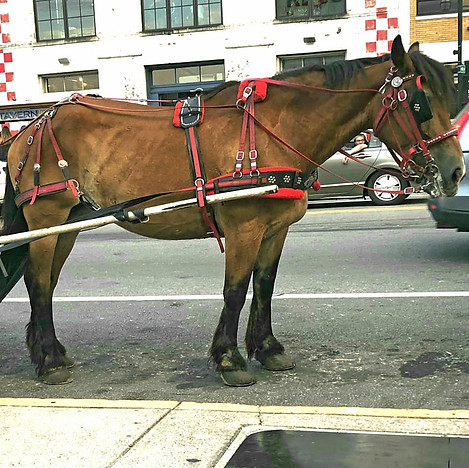 Working Horse with Sores on Feet.jpg