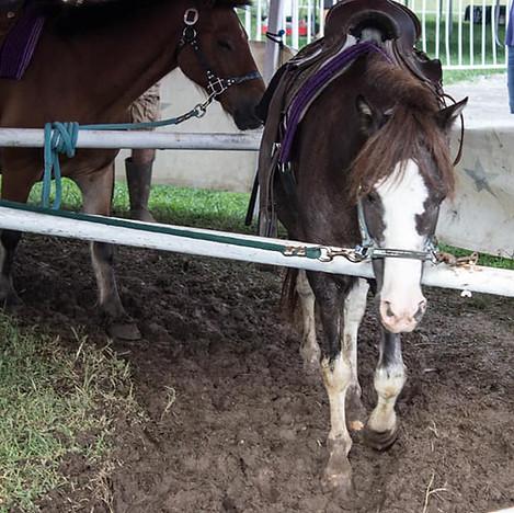 Lame Pony Wilson Co Fair.jpg