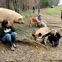Chilling at The Pig Preserve.jpg