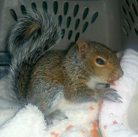 Rescued Squirrel.jpg
