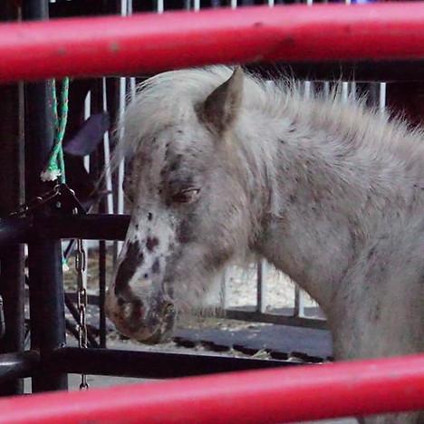 Circus pony.jpg