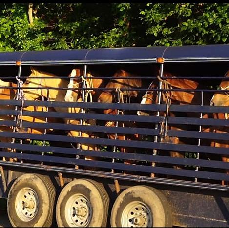 Rodeo Horses.jpg