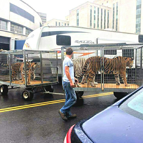 Tigers Caged Shrine Circus Photo Angela