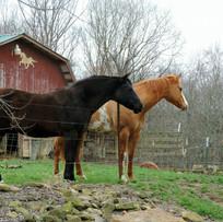 Horses Photo Julie Henry.jpg