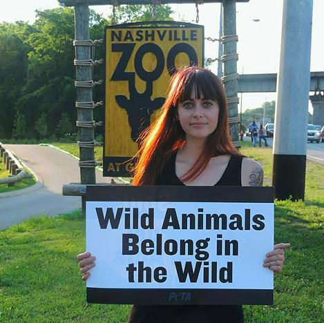 Wild Animals Belong in the Wild.jpg