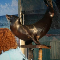 Sea Lion Skin Infection.jpg