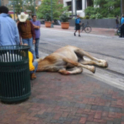 Memphis Carriage Horse Junior.jpg