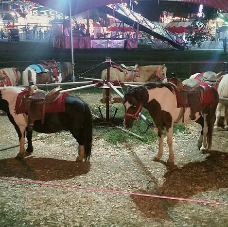Wilson County Fair Exploitation.jpg