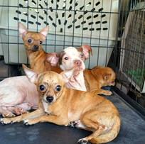 Rescued Dogs.jpg