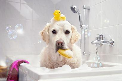 Dog-in-a-Bathtub.jpg