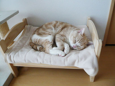 ikea-duktig-bed-hack-cat-bed-19.jpg