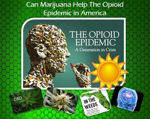 Marijuana for Opioid addiction - FLBest420