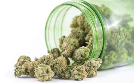 Best medical marijuana seed strains