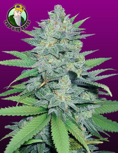 Green Crack Seeds for sale