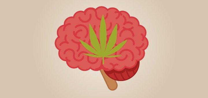 does cbd get you high