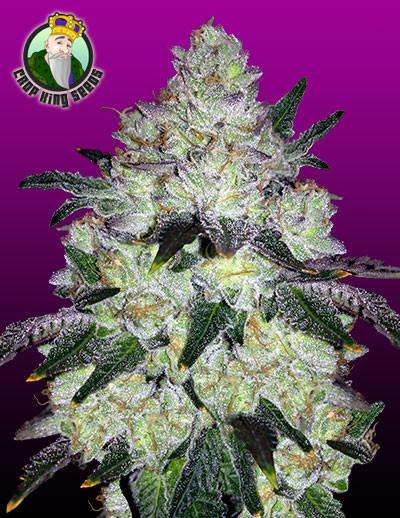 https://www.seedsman.com/en/cannabis-seeds/?a_aid=flbest420