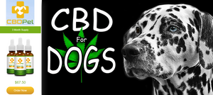 CBD Oil for pets in Florida