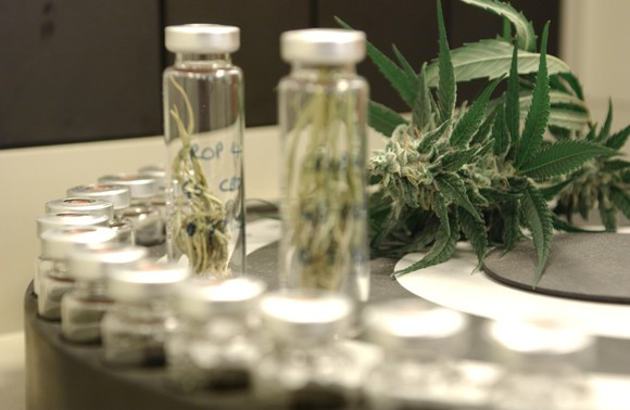 Veterans Push For Medical Marijuana To Treat PTSD & Siezures